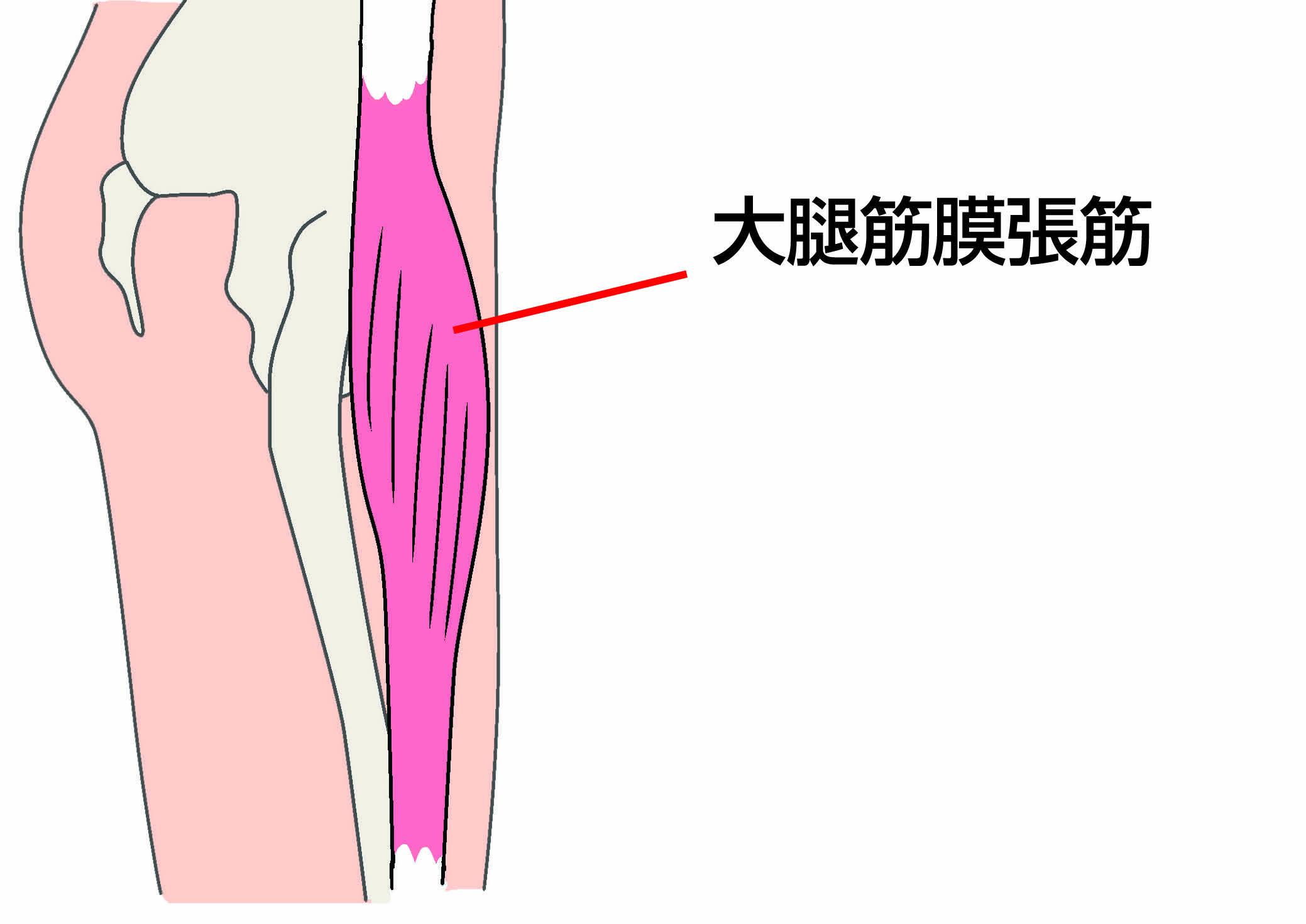 大腿筋.jpg